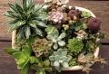 Créer un mini jardin de plantes grasses : les secrets pour faire son mini univers vert
