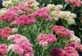 Plantes grasses extérieur qui ne gèlent pas : 9 idées de choix et astuces bonus